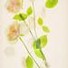 Falling Rose Petals by Harold Davis