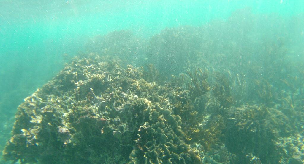 Yucatan trip photos from snorkling 11976042154_04b02f7cea_b