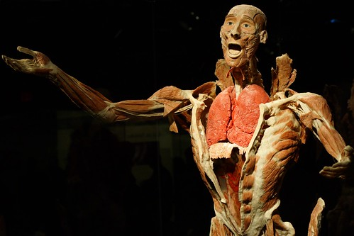 Buy The Human Body Exhibition tickets to the The Human Body Exhibition schedule and dates. Purchase cheap The Human Body Exhibition tickets and discounted The Human Body Exhibition tickets at TicketSupply.