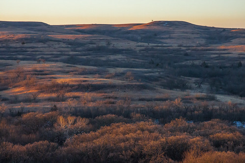 winter grass dawn buffalo ks hills kansas prairie plains bison flint graze flinthills konzaprairie konza bluestem
