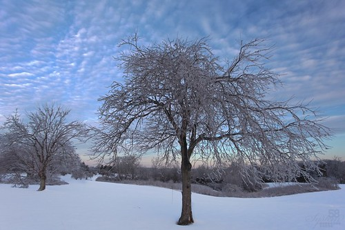morning winter snow tree ice clouds landscape kentucky ky louisville 500px