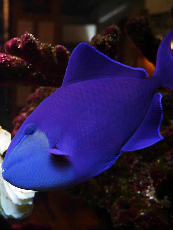 Blue fish #2