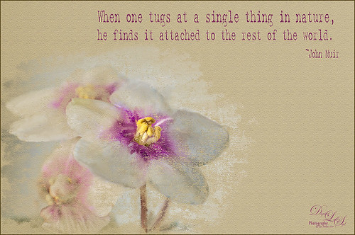 Image of painted violet with a saying