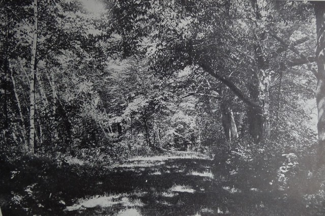Chapman, Autobiography, chestnuts in Phelps Woods