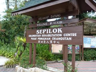 Sepilok Orangutan Rehabilitation Centre (Borneo, Malasia)
