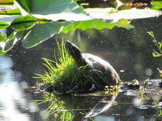 Beaver Lake at Stanley Park