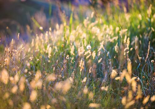 summer photography impressionism