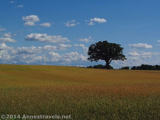 One of my favorite pictures I took that day: Wheat Fields south of Rochester, New York