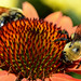 Bee Yourself by jamey15