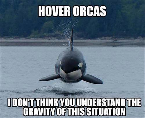 Hover_Orca