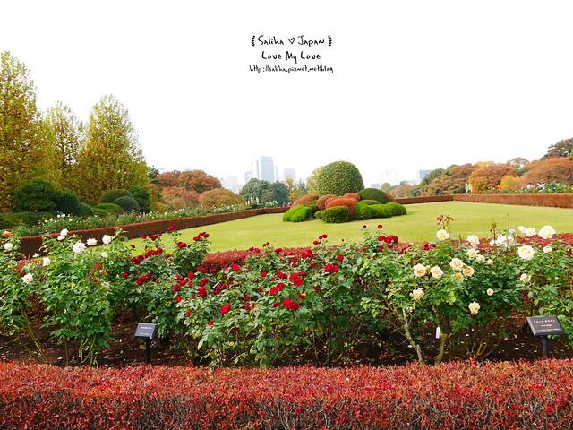 日本東京自由行新宿御苑庭園景點 (6)