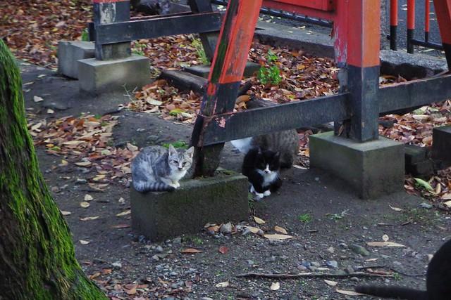 Today's Cat@2016-12-14
