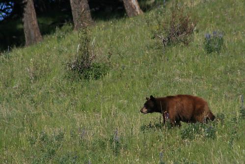 bison_range_20130615_171