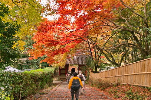 【写真】紅葉 : 金蔵寺