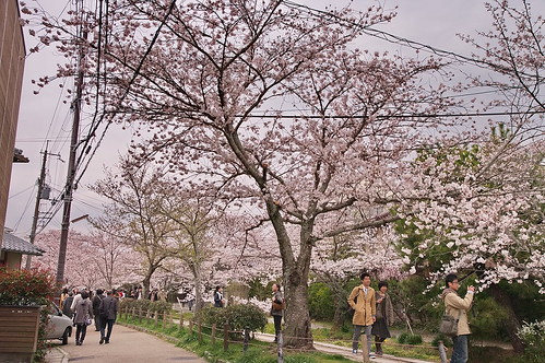 【写真】2013 桜 : 哲学の道/2018-12-24/IMGP9230