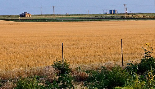sky house oklahoma field fence landscape sunflower prairie