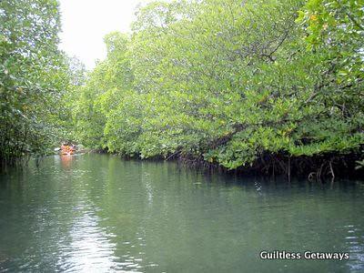 mangroves-coron.jpg