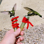 TrekOhio: Hand-feeding Hummingbirds at Lake Hope