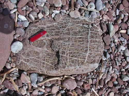 Beautiful beach rocks by Lithified Detritus V