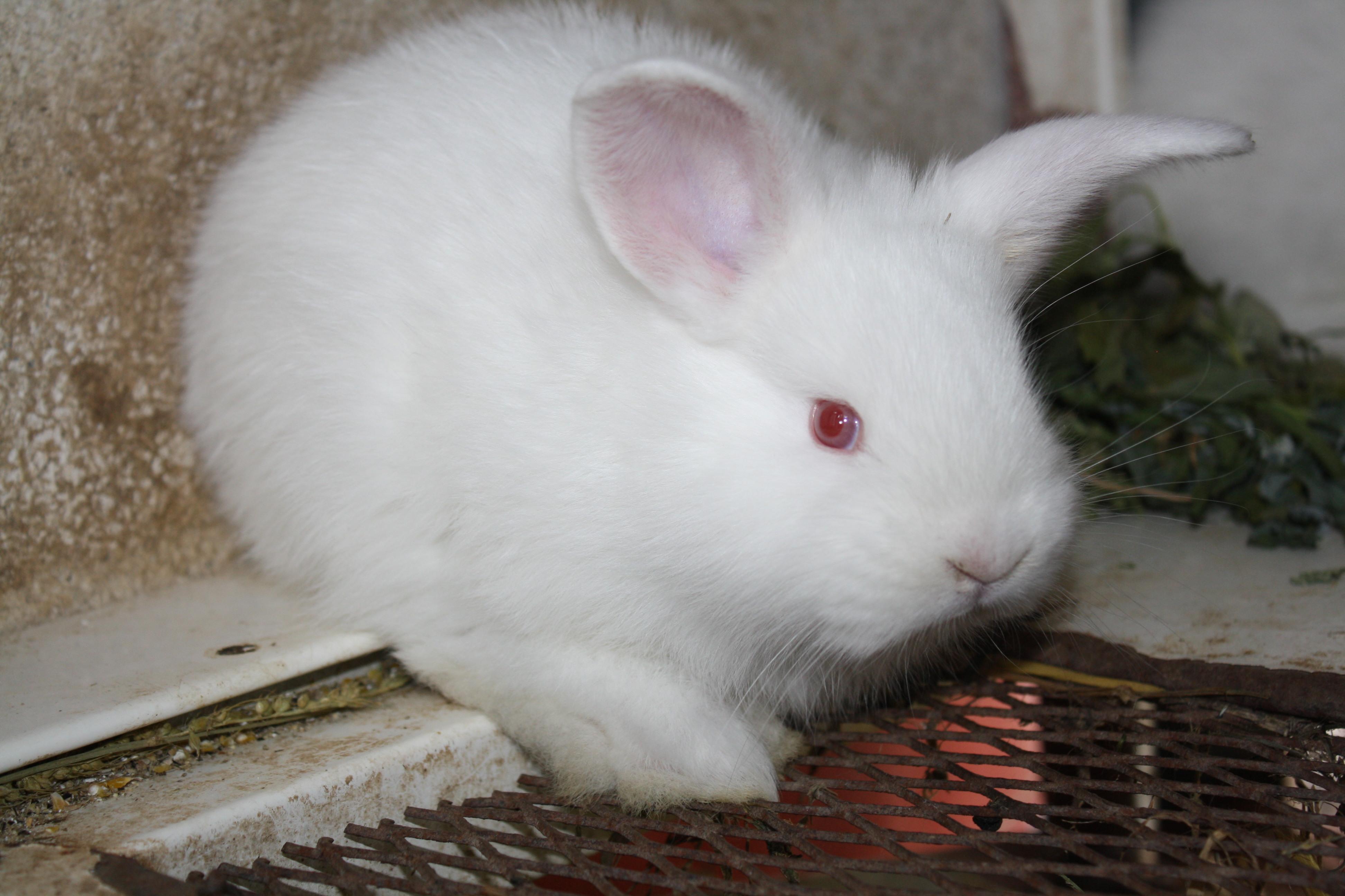 ce mananca iepurii