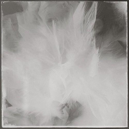 Fowl 8.14.13