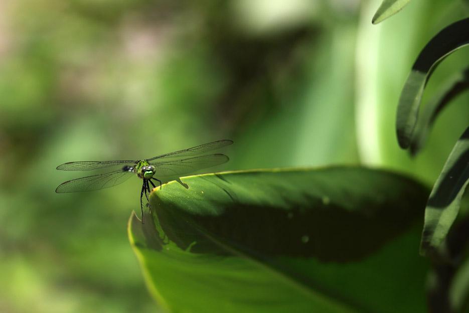 073113_04_bug_Dragonfly06