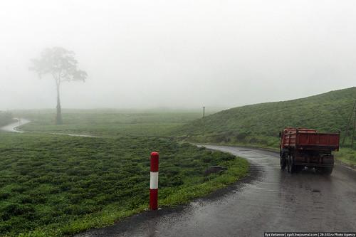 africa road mist tree rain fog truck cameroon