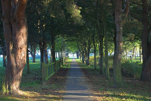 Tree-lined path