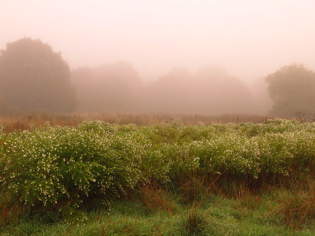 Early Morning Mist on Pryors Field
