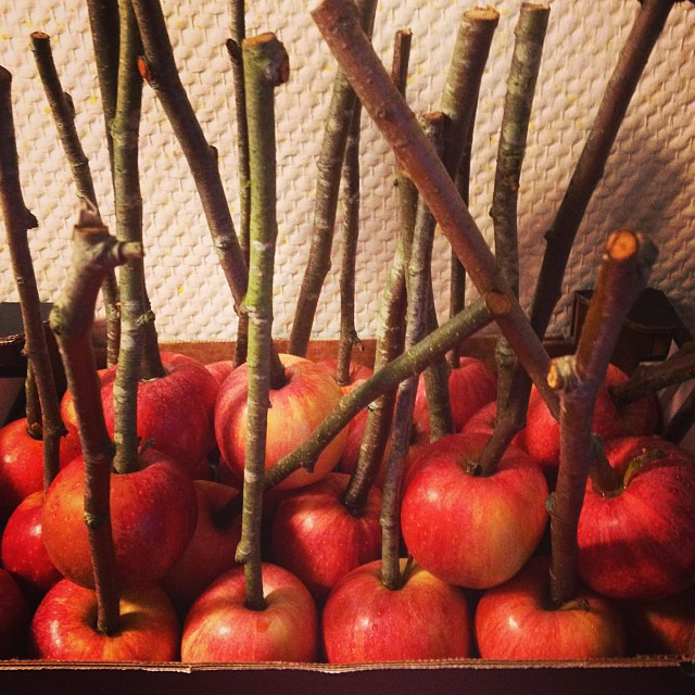 soon-to-be caramel apples #halloweenfest
