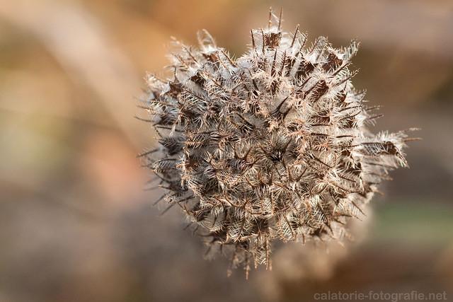 Frumusețea de la un pas de noi - în natură cu Nikon 60 mm Micro f/2,8 AF-D 10501506476_7c7d351de2_z