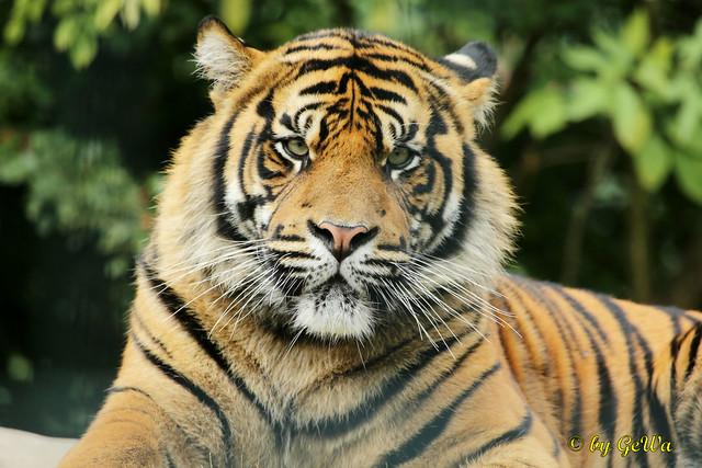 Flickr: The Flickr Big Cats Pool