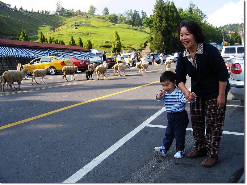 Jacob 的綿羊初體驗 2