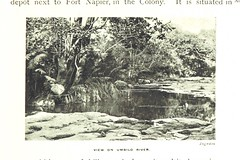"""British Library digitised image from page 173 of """"The Colony of Natal. An official illustrated handbook and railway guide"""""""
