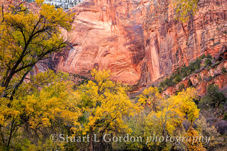 Zion in Autumn_1463