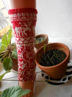 нога, подпертая мусиной травой