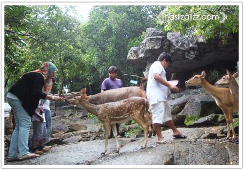 11711860394 3f683b810e o BERCUTI DI HATYAI THAILAND PART 6   songkhla Zoo