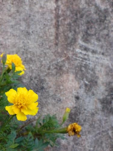 Yellow''