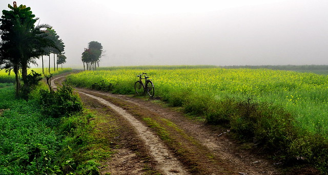 'Country Roads, take me home...'