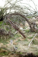 Deserted Barbed Wire