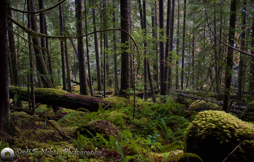 river washington wolf unitedstates gray sequim trail lower olympicnationalforest olympicpensula