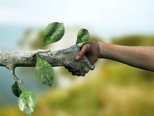 negocios sustentables.jpg