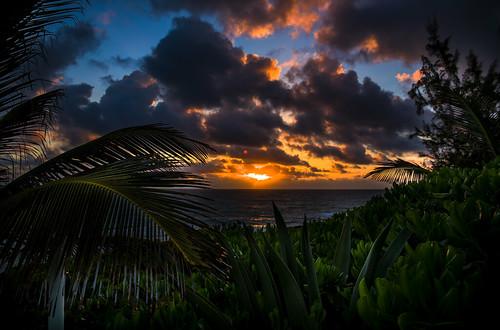 canon longisland bahamas