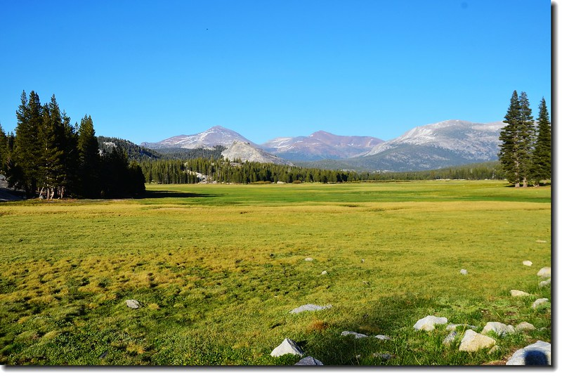 Mount Dana, Lembert Dome, Mount Gibbs and Mammoth Peak from Tuolumne Meadows