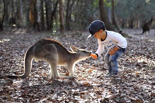#kangaroos