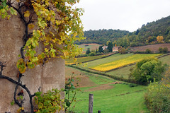 2016-10-24 10-30 Burgund 180 Berze-La-Ville - Photo of Clessé