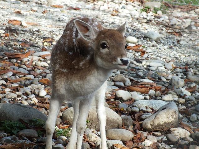 Bambi, Fujifilm FinePix HS30EXR