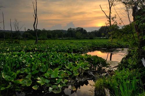 sunset nature lily marsh pads cuyahogavalleynationalpark cvnp d90 beavermarsh circularpolarizerhdrphotomatixnikon