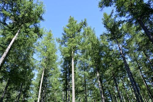 Forêt du Mont Boussuivre - Violay (42)