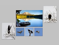 Lake and Osprey Triptych on Metal